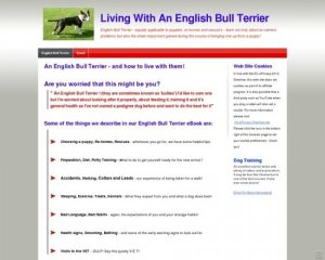 Learning To Live With An English Bull Terrier From Puppy To Adult